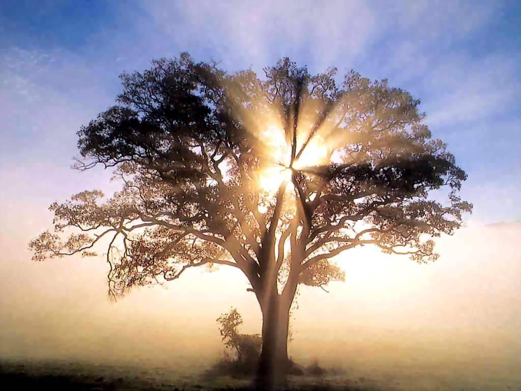 Treeinlightandgloom
