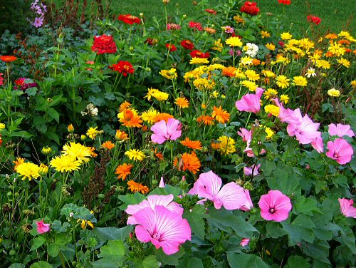 summer-flower-garden-picture