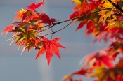 autumn-leaves-2916638_960_720