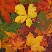 Fall leave mosaic